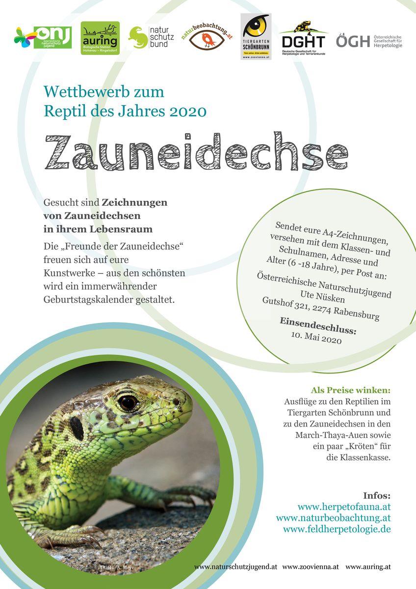 Wettbewerb Zauneidechse 2020