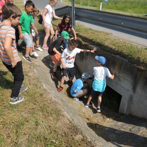 Am Krötentunnel, Foto: U. Nüsken